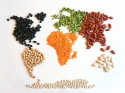 lenticchie di importazione